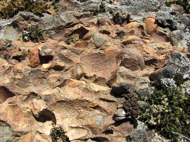 Conglomerate Rock on Mount Galiano