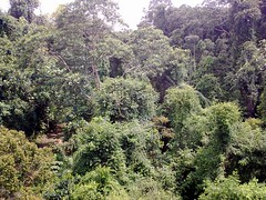 nature reserve, shrub, rainforest, tree, old-growth forest, flora, forest, natural environment, wilderness, jungle, biome, vegetation, temperate broadleaf and mixed forest,