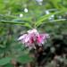 3595575374_4901bee021_s
