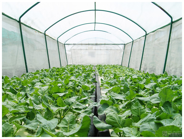 3608701596 54cae337ed z - What You didn't Know about the Benefits of Growing Plants and Vegetables with Hydroponics