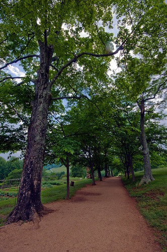 trees landscape virginia row unescoworldheritagesite va jefferson monticello dri thomasjefferson mulberry d300 charlottsville