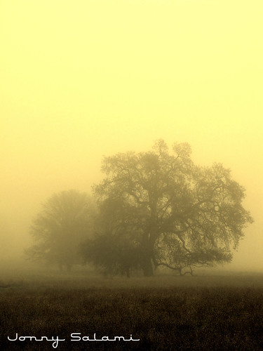 morning tree northerncalifornia fog sunrise oak jonny salami colusacounty cagold