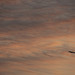 Small photo of Airplane