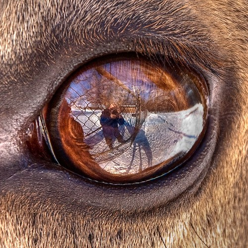 shadow selfportrait reflection eye nature animal closeup reflections nikon karma elk lightroom d80 bej akob platinumphoto karmanominated 1on1reflections
