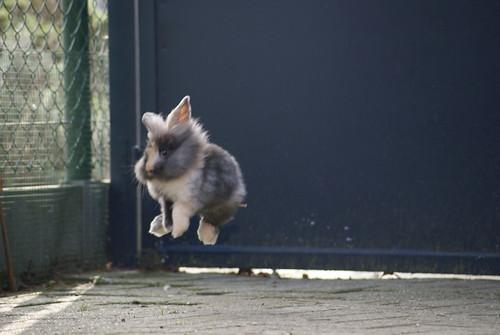 Jump for joy by jpockele