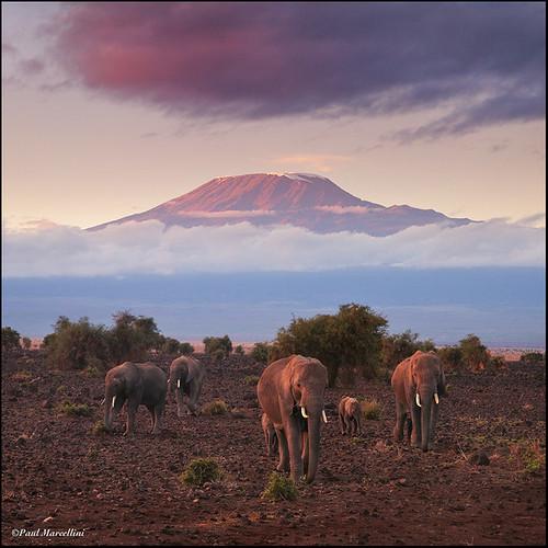 africa elephant kilimanjaro kenya reflexions amboseli superaplus aplusphoto paulmarcellini animalscape canon5dmk2 canon5dmarkii canon5d2