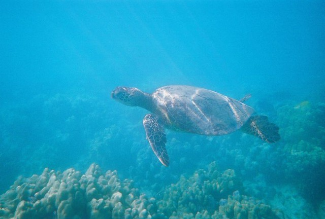 Hawaii Snorkling