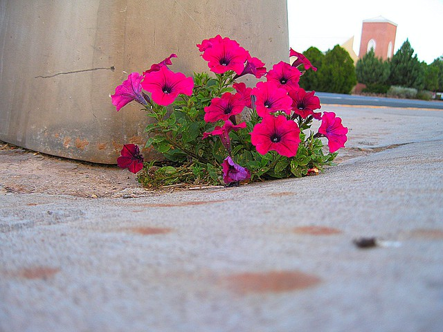 flowers in the side walk