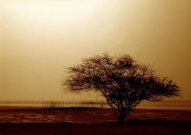 Lonely Tree Wallpaper Ali Samimi Flickr