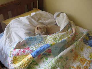 Vintage Sheet Quilt and cat