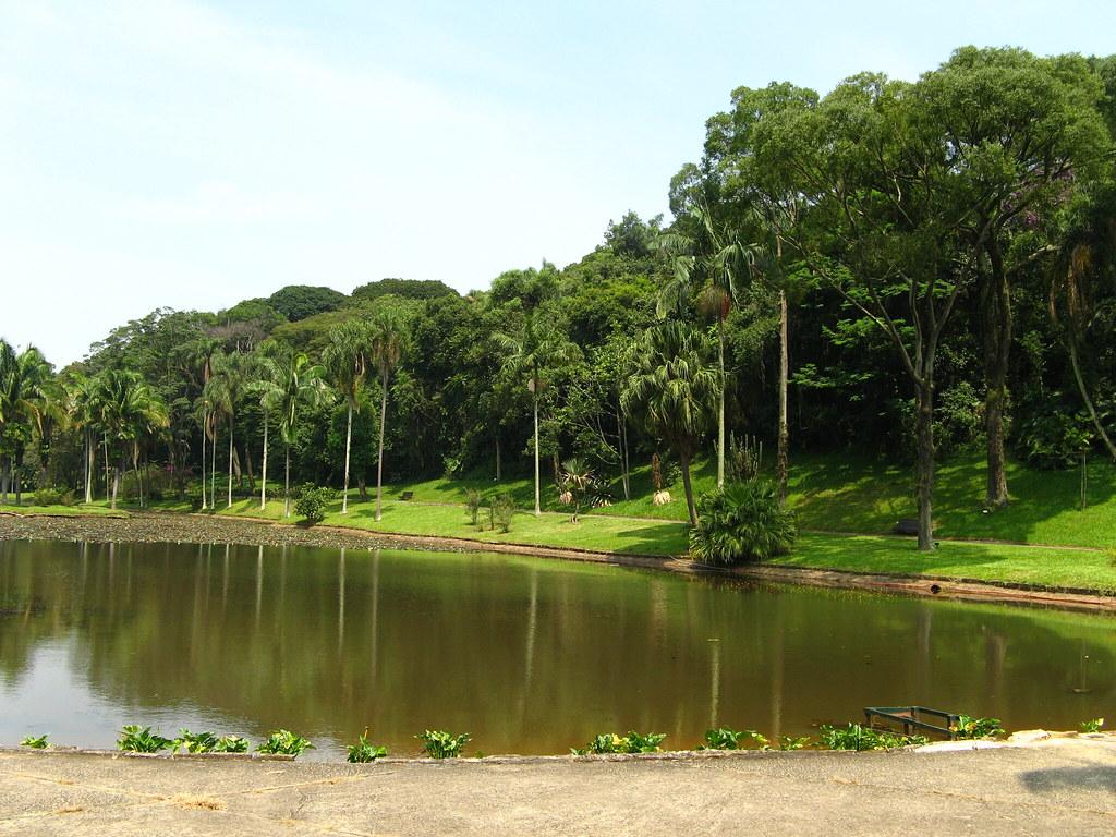 lago das ninféias, Jardim botanico São paulo, Brasil