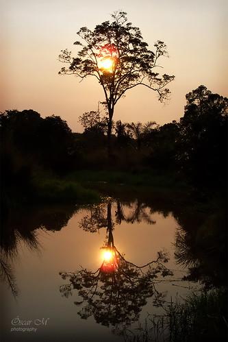 africa trip travel viaje sunset sun lake reflection tree sol lago reflejo árbol viagem lagoa laguna puesta árvore reflexo mozambique moçambique entardecer poente zambezia