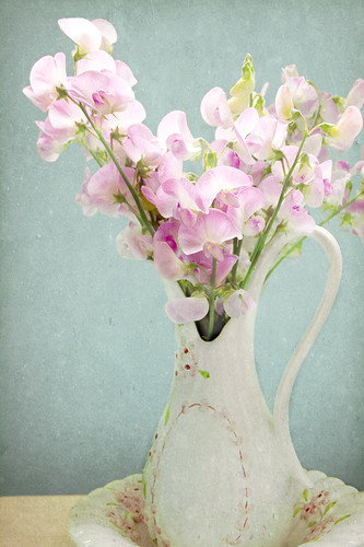 Sweet Peas from Sharon