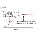Schematic of stand growth pattern