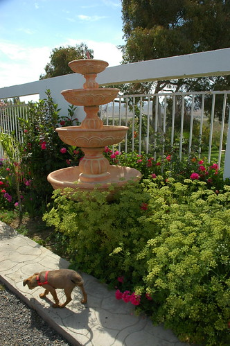 Rosie as a puppy, exploring the garden, fountain, fence, Baja's Best El Rosario Cafe Bed and Breakfast, Baja California Norte, Mexico by Wonderlane