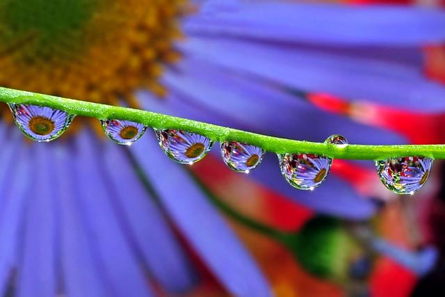 fabulous fluid floral flairs