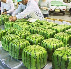 vegetable(0.0), plant(0.0), produce(0.0), watermelon(1.0), fruit(1.0), food(1.0), cucurbita(1.0), gourd(1.0),