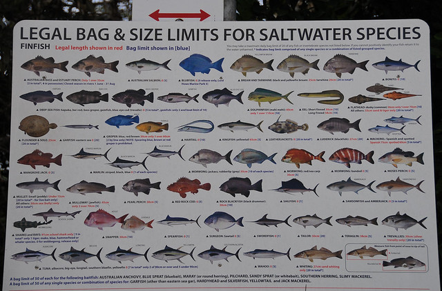 saltwater fish bag size limits at brunswick heads