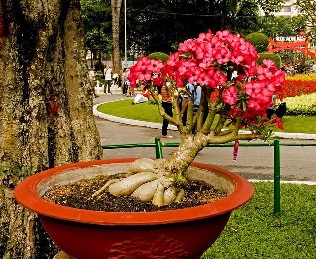 Saigon. Exposition de fleurs