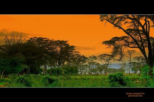 africa trees panorama plants nature alberi landscape tanzania view natura vista ngorongorocrater veduta unescoworldheritage vulcano volcan vegetazione arusharegion acaciaafricana africanacacia riservanaturalengorongoro ngorongoroconsevationarea crateredingorongoro pianuraserengeti patrimonioumanitàunesco
