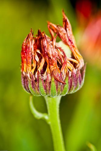 flowers april 2009