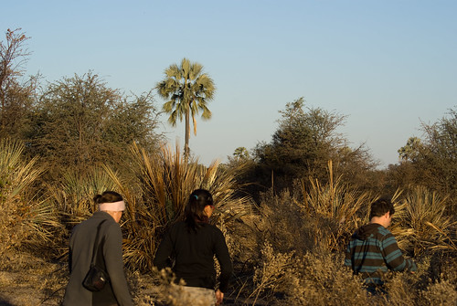 A group of travellers enjoying a guided tour in Okavango.
