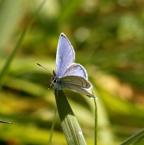Mariposa azul ( Montse y su grupo))
