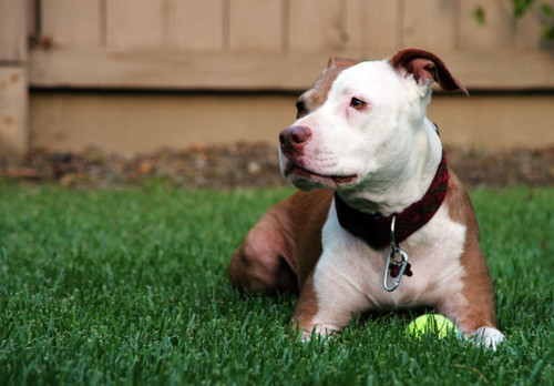 Pit Bull: Oh ball, how I have scorned you