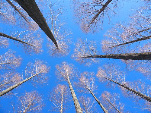 Reaching for the Winter's Sky