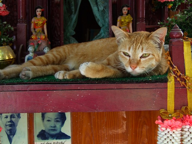 Chiang Mai, Wat Upakut, 22/01/2009
