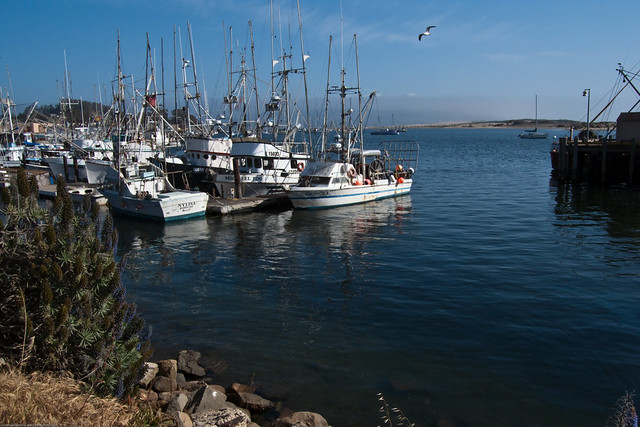 Fishing vessels boats in the morro bay ca harbor along for Morro bay fishing