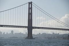 suspension bridge, line, bridge, cable-stayed bridge,