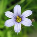 Eastern Blue-eyed Grass - Photo (c) beautifulcataya, some rights reserved (CC BY-NC-ND)
