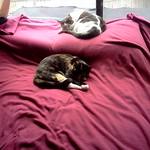 03/07 - Cat Naps