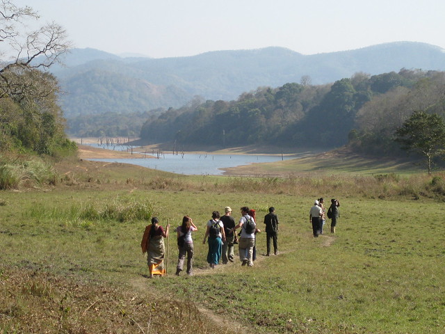 Trekking in Periyar Reserve