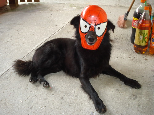 Sombra, the Spider-Dog