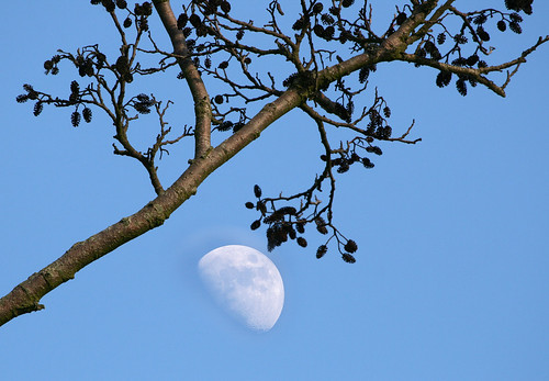 Tree and half Moon, Stodmarsh Nature Reserve