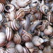 snails in sicilian market
