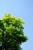 Photo:20090520 Narai-Juku 6 (Green tree) By BONGURI