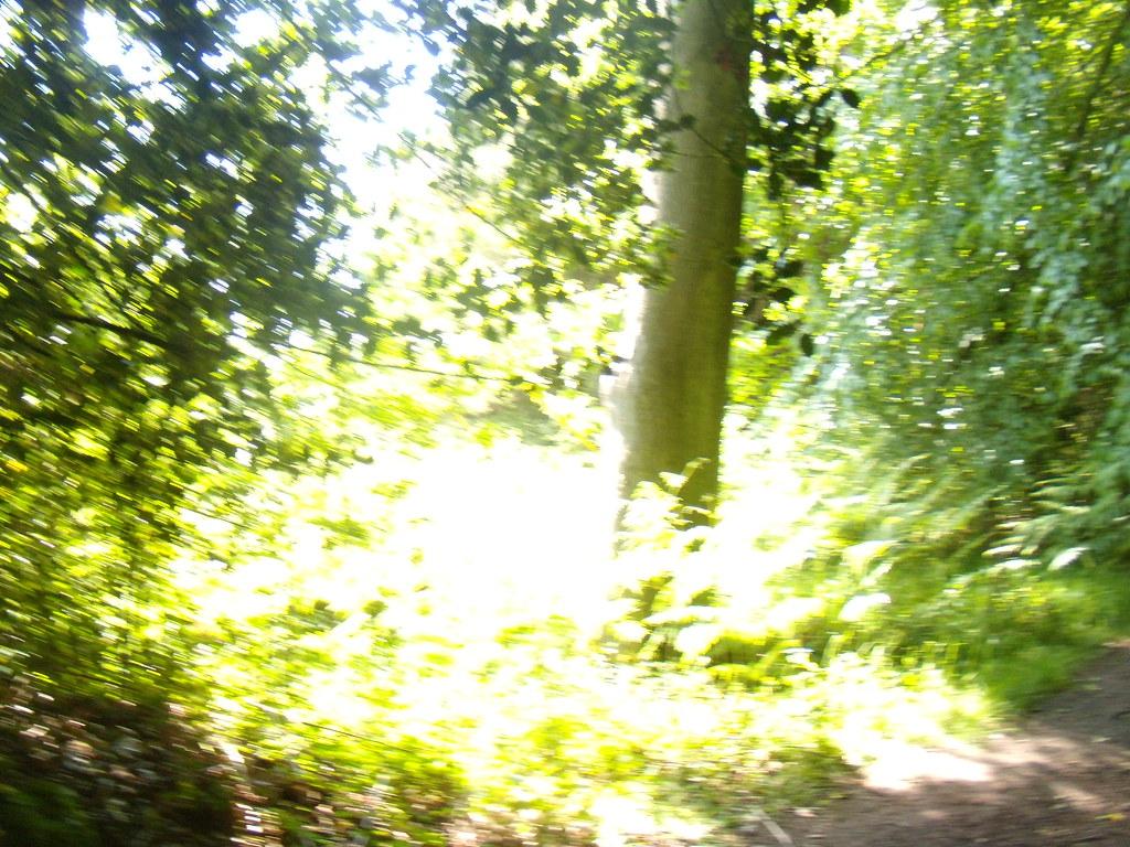 Bright patch Haslemere round walk