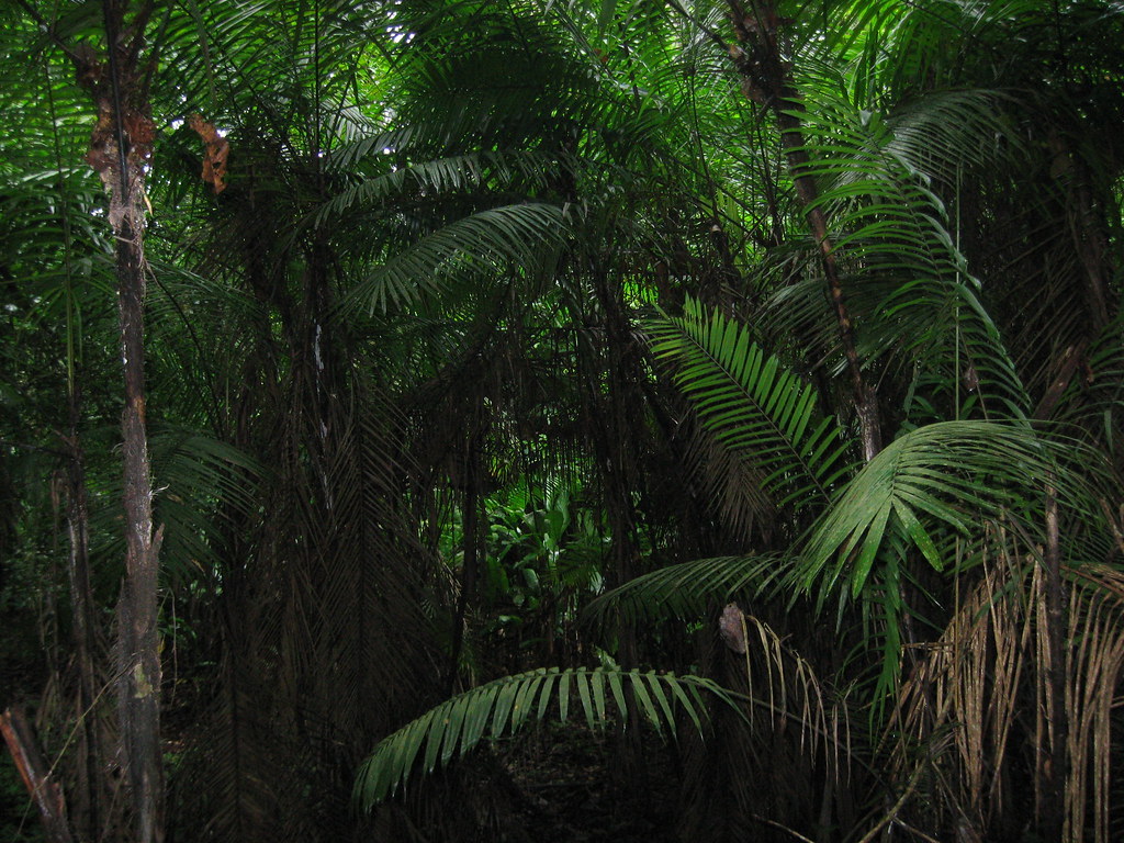 Jungle Foliage
