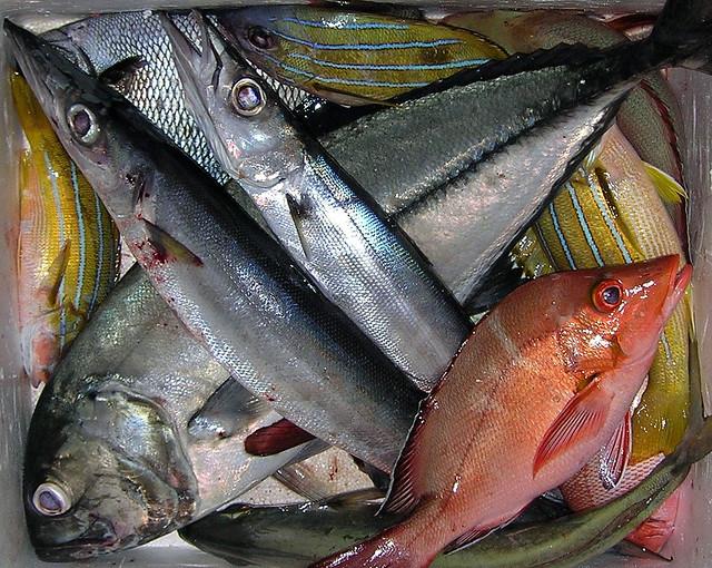 Pesca notturna alle Maldive