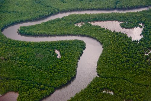 Caroni Swamp, Trinidad
