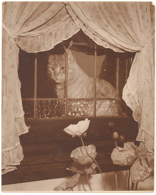 Cat in the window, 1930s / Sam Hood