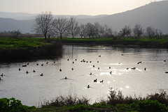 Hula Lake  by Or Hiltch, on Flickr