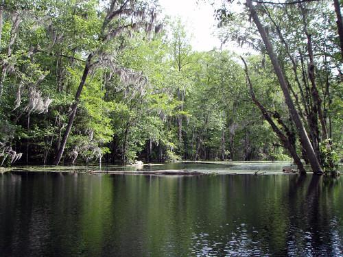 unitedstates florida kayaking ichetuckneeriver fortwhite ichetuckneespringsstatepark 115kmwofjacksonville
