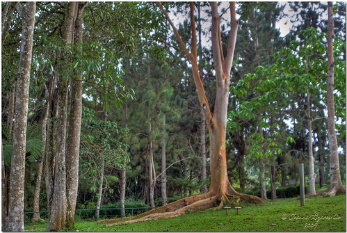 park trees mountain nature playground forest philippines resort eden pk hdr davao davaocity davaodelsur pinoykodakero garbongbisaya