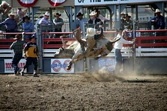 western riding(0.0), equestrian sport(0.0), dirt track racing(0.0), race track(0.0), barrel racing(0.0), animal sports(1.0), rodeo(1.0), event(1.0), sports(1.0), bull riding(1.0),