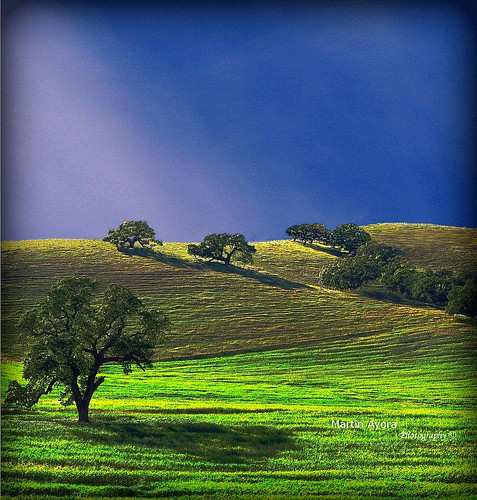 california sky nature topf25 olympus gilroy breathtaking greengrass 18180mm colorphotoaward e410 breathtakinggoldaward artofimages bestcapturesaoi