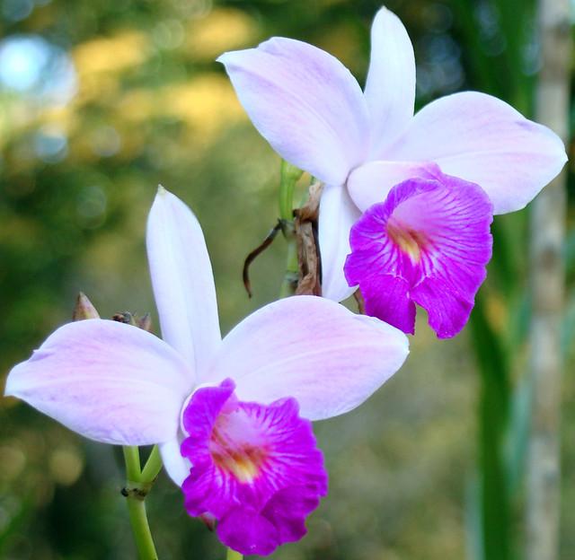 flores coloridas jardim:Flores Coloridas – Jardim Botânico – Rio de Janeiro, RJ